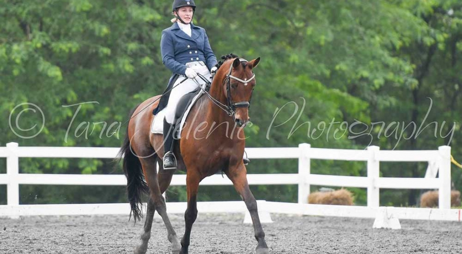 Fwd-Dressage-Festival-Photos image003