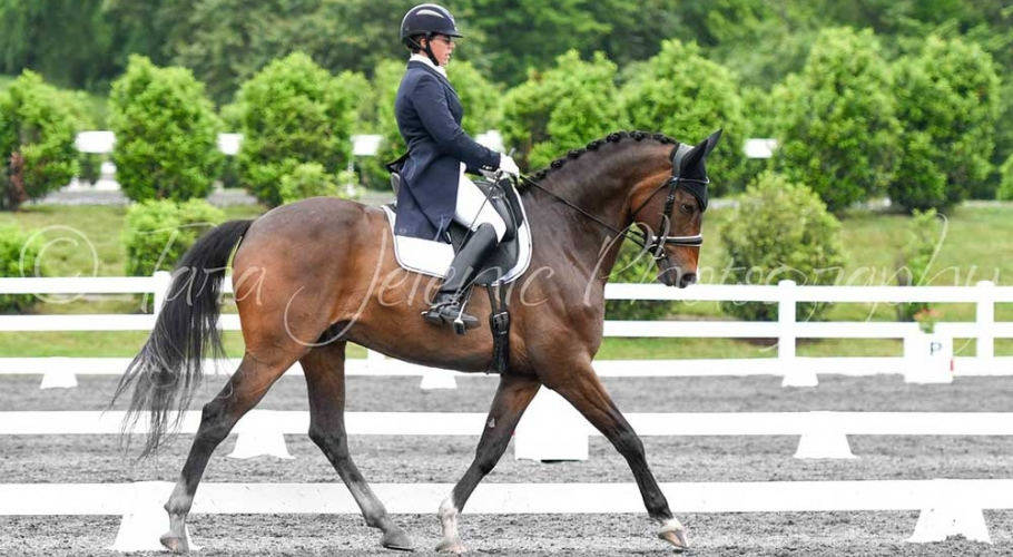Fwd-Dressage-Festival-Photos image005